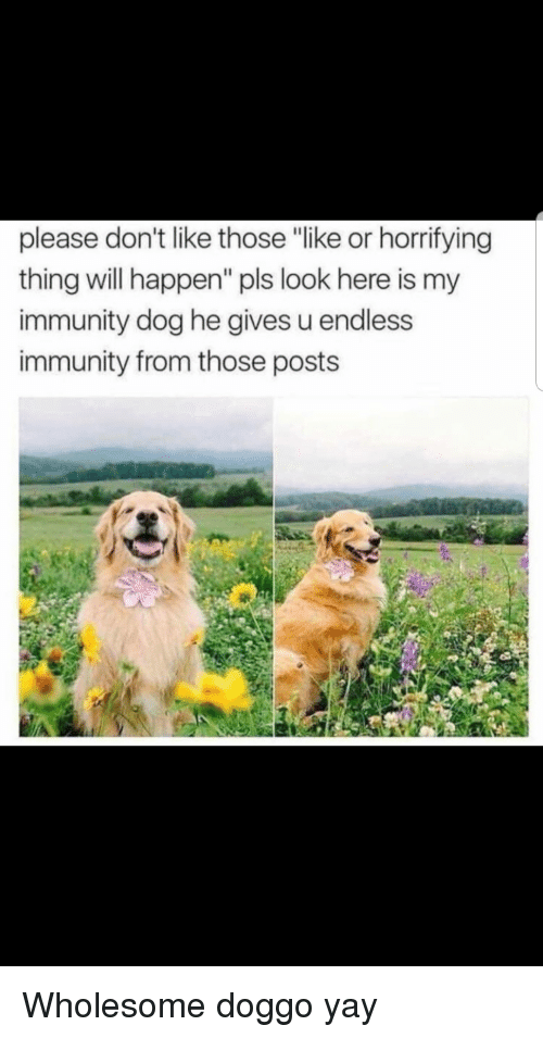 """Wholesome, Doggo, and Dog: please don't like those """"like or horrifying  thing will happen"""" pls look here is my  immunity dog he gives u endless  immunity from those posts Wholesome doggo yay"""