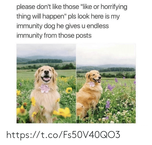 """Memes, 🤖, and Dog: please don't like those """"like or horrifying  thing will happen"""" pls look here is my  immunity dog he gives u endless  immunity from those posts https://t.co/Fs50V40QO3"""