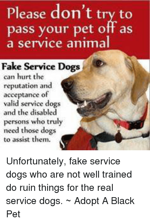 Where Do Adopt A Dog That Was A Service Animal