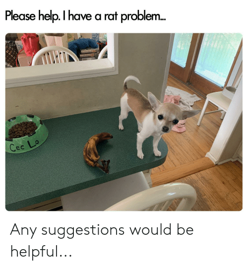 Help, Dank Memes, and Rat: Please help. I have a rat proble...  Cee Lo Any suggestions would be helpful...