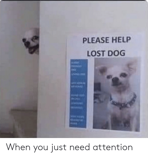 Funny, Lost, and Help: PLEASE HELP  LOST DOG When you just need attention