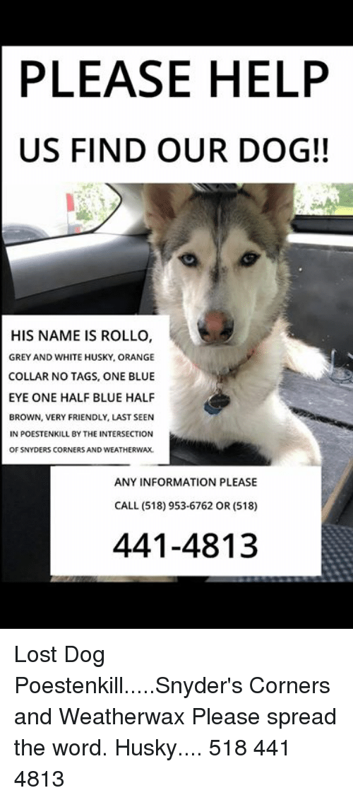 PLEASE HELP US FIND OUR DOG!! HIS NAME IS ROLLO GREY AND
