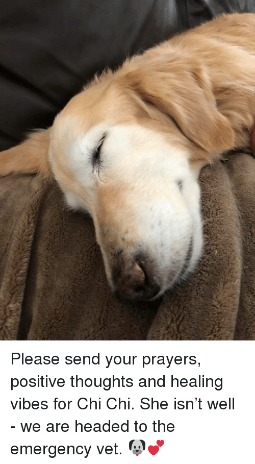 Please Send Your Prayers Positive Thoughts And Healing Vibes For Chi