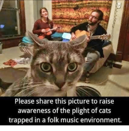 Cats, Music, and Picture: Please share this picture to raise  awareness of the plight of cats  trapped in a folk music environment.