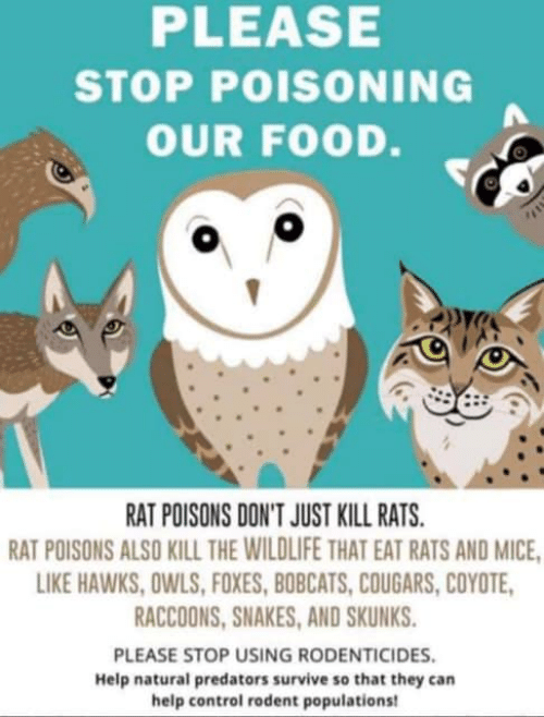 PLEASE STOP POISONING OUR FOOD RAT POISONS DON'T JUST KILL RATS RAT
