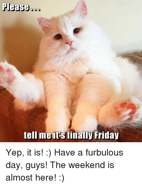 Memes, The Weekend, and 🤖: Please  tell me its finally Friday Yep, it is! :) Have a furbulous day, guys! The weekend is almost here! :)