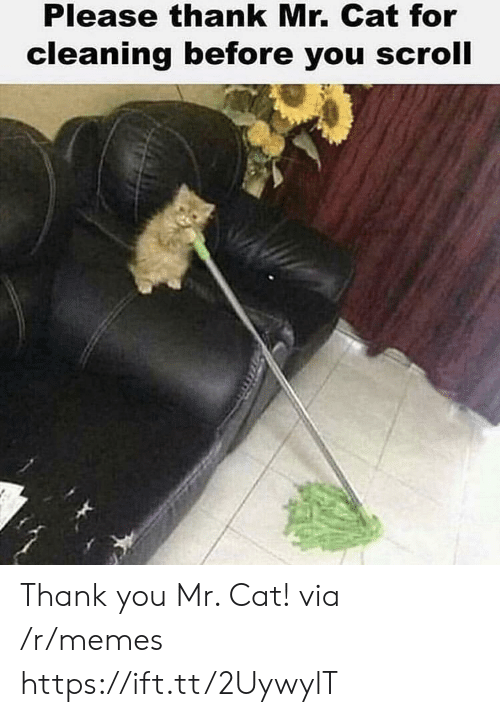 Memes, Thank You, and Cat: Please thank Mr. Cat for  cleaning before you scroll Thank you Mr. Cat! via /r/memes https://ift.tt/2UywylT