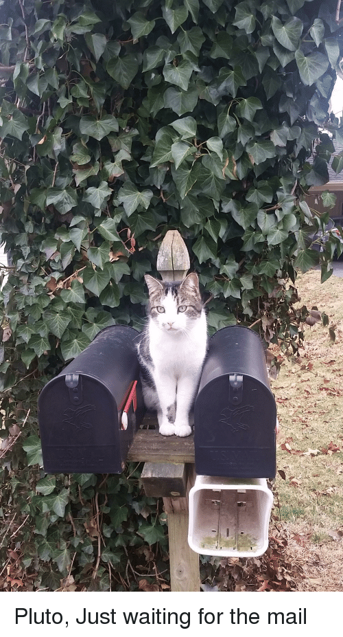 Waiting For Mail >> Mail And Mail Meme On Me Me
