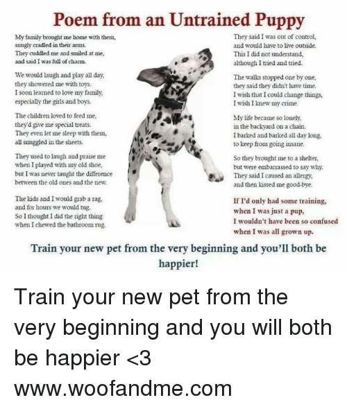 Poem From an Untrained Puppy They Said I Was Out of Control