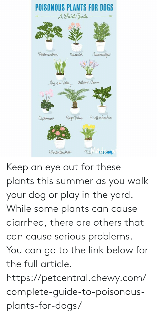 POISONOUS PLANTS FOR DOGS a Fuld Guide Japunse Your
