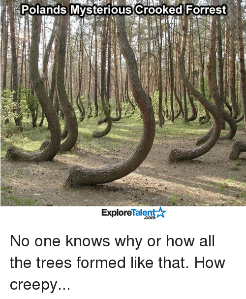 Creepy, Memes, and Trees: Polands Mysterious crooked Forrest  Talent  Explore No one knows why or how all the trees formed like that. How creepy...