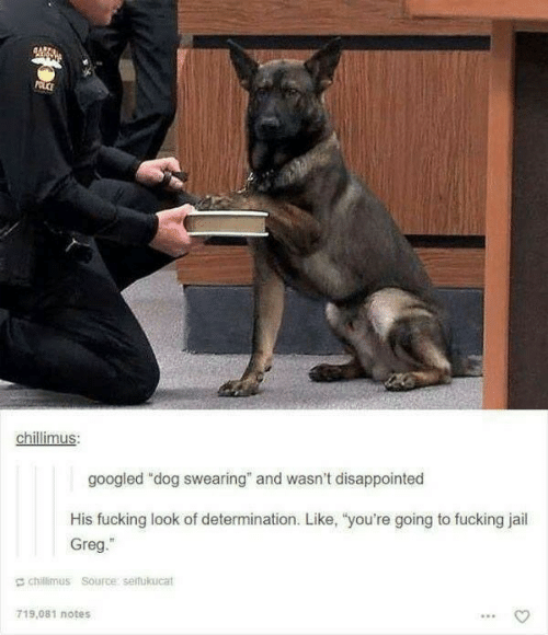 """Disappointed, Fucking, and Jail: POLCE  chillimus:  googled """"dog swearing"""" and wasn't disappointed  His fucking look of determination. Like, """"you're going to fucking jail  Greg.""""  chillimus Source: seifukucat  719.081 notes"""