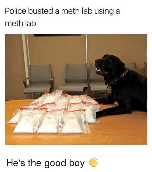 Dank, 🤖, and Meth: Police busted a meth lab using a  meth lab He's the good boy 👏