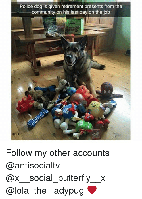 Presents From The Dog Part - 44: Community, Memes, And Police: Police Dog Is Given Retirement Presents From  The Community