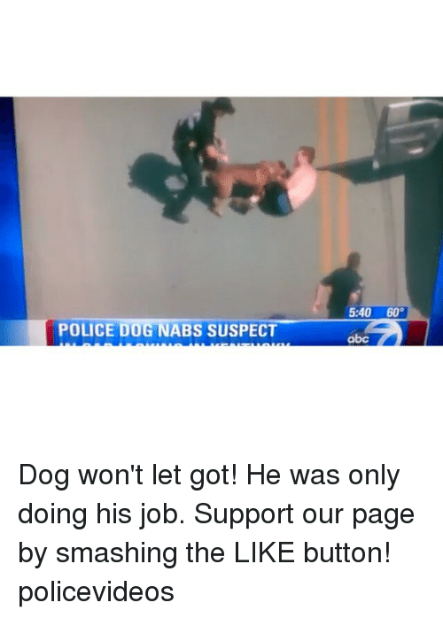 Abc, Dogs, and Police: POLICE DOG NABS SUSPECT  5:40 60  abc Dog won't let got! He was only doing his job. Support our page by smashing the LIKE button! policevideos