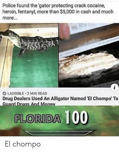 Heroin, Police, and Alligator: Police found the 'gator protecting crack cocaine,  heroin,fentanyl, more than $5,000 in cash and much  more...  LADBIBLE 2 MIN READ  Drug Dealers Used An Alligator Named 'El Chompo' To  Guard Druas And Monev  FLORIDA 100 El chompo