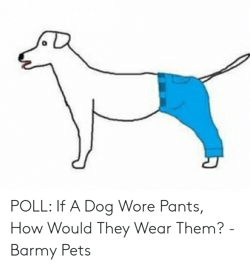 POLL if a Dog Wore Pants How Would They Wear Them? - Barmy Pets