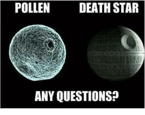 death star memes and death pollen death star any questions