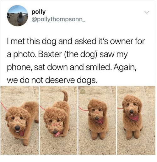 Dank, Dogs, and Phone: polly  @pollythompsonn  l met this dog and asked it's owner for  a photo. Baxter (tne dog) saw mny  phone, sat down and smiled. Again,  we do not deserve dogs.