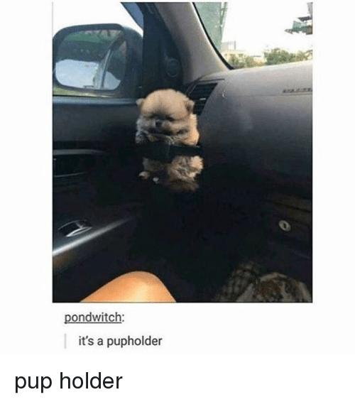 Memes, Pup, and 🤖: pondwitch:  it's a pupholder pup holder