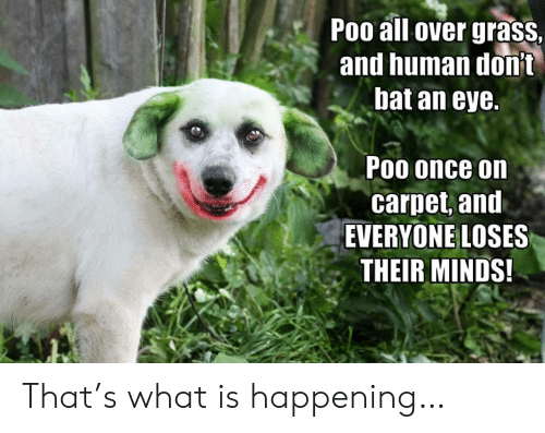 What Is, Eye, and Human: Poo all over grass  and human donit  bat an eye.  Poo once on  carpet, and  EVERYONE LOSES  THEIR MINDS! That's what is happening…