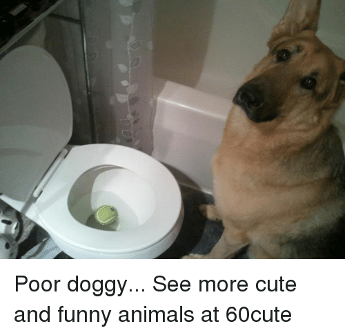 poor doggy see more cute and funny animals at 60cute 16732889 ✅ 25 best memes about cute and funny animals cute and funny