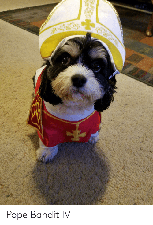 Pope Francis and Bandit: Pope Bandit IV