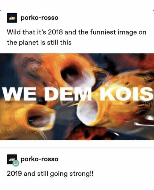 Image, Wild, and Strong: porko-rosso  Wild that it's 2018 and the funniest image on  the planet is still this  WE DE  KoIS  porko-rosso  2019 and still going strong!
