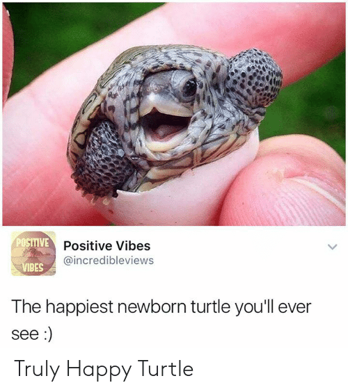 Happy, Turtle, and Happiest: POSITIVE D  VPositive Vibes  @incredibleviews  IBES  The happiest newborn turtle you'll ever  see Truly Happy Turtle