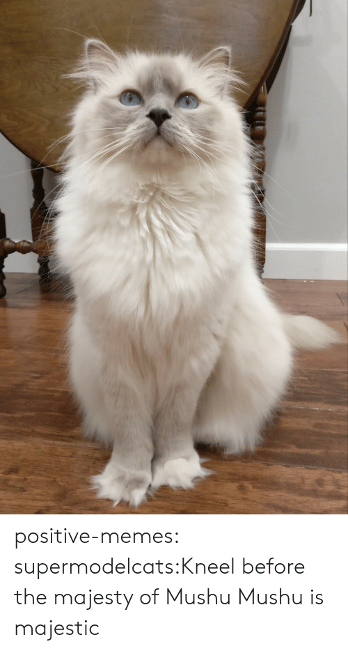 Memes, Tumblr, and Blog: positive-memes:  supermodelcats:Kneel before the majesty of Mushu Mushu is majestic