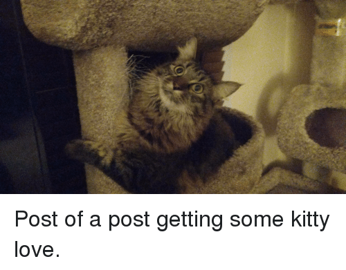 Love, Help, and Can: Post of a post getting some kitty love.