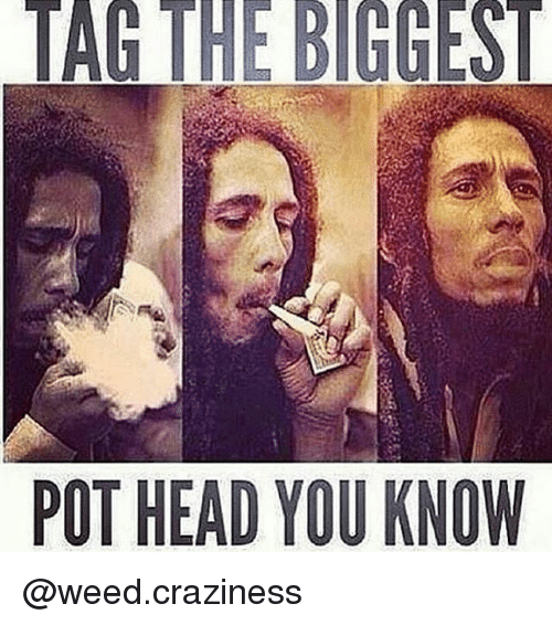 Head, Memes, and Weed: POT HEAD YOU KNOW  TR. @weed.craziness
