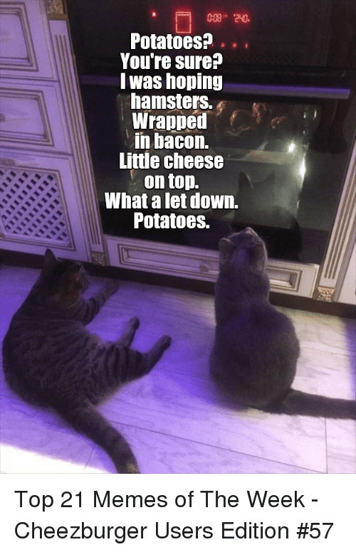 Memes, Bacon, and Cheese: Potatoes?.  Youre sure?  lwas hoping  hamsters.  Wrapped  in bacon.  Little cheese  . on top.  What a let down.  Potatoes. Top 21 Memes of The Week - Cheezburger Users Edition #57