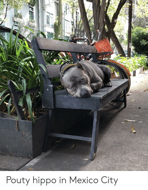 Mexico, Mexico City, and Hippo: Pouty hippo in Mexico City
