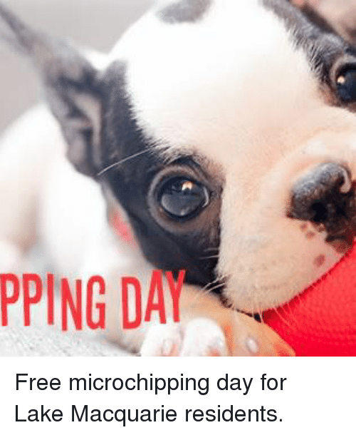 Memes, Free, and 🤖: PPING DAI Free microchipping day for Lake Macquarie residents