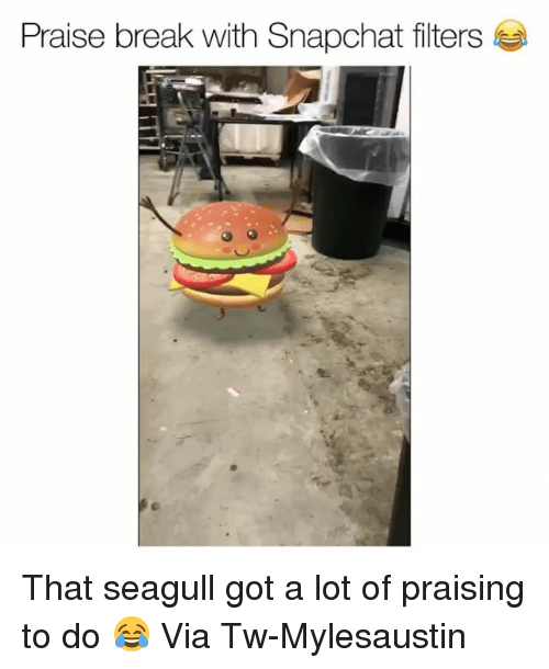 Funny, Snapchat, and Break: Praise break with Snapchat filters That seagull got a lot of praising to do 😂 Via Tw-Mylesaustin