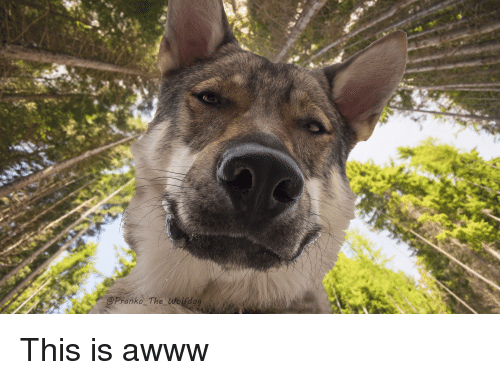 Awww, This, and This Is: @Pranko The Wolfdo