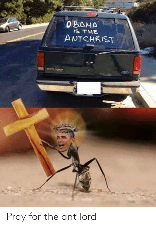 Ant, Lord, and For: Pray for the ant lord