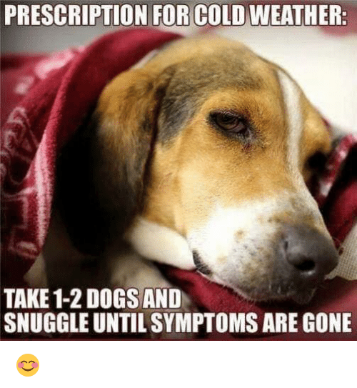 Memes, Weather, and Cold: PRESCRIPTION FOR COLD WEATHER.  TAKE 1-2 DOGS AND  SNUGGLEUNTILSYMPTOMS ARE GONE 😊
