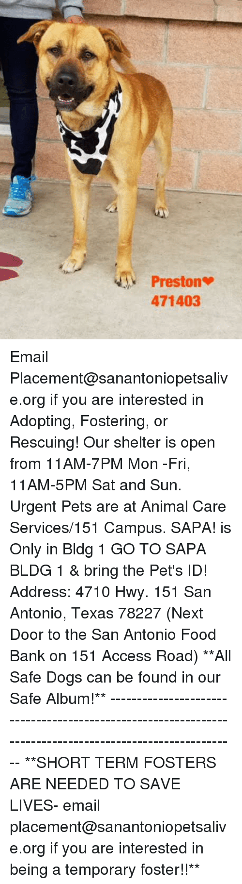 Dogs, Food, and Memes: Preston  471403 Email Placement@sanantoniopetsalive.org if you are interested in Adopting, Fostering, or Rescuing!  Our shelter is open from 11AM-7PM Mon -Fri, 11AM-5PM Sat and Sun.  Urgent Pets are at Animal Care Services/151 Campus. SAPA! is Only in Bldg 1 GO TO SAPA BLDG 1 & bring the Pet's ID! Address: 4710 Hwy. 151 San Antonio, Texas 78227 (Next Door to the San Antonio Food Bank on 151 Access Road)  **All Safe Dogs can be found in our Safe Album!** ---------------------------------------------------------------------------------------------------------- **SHORT TERM FOSTERS ARE NEEDED TO SAVE LIVES- email placement@sanantoniopetsalive.org if you are interested in being a temporary foster!!**