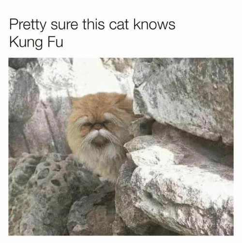 Dank, 🤖, and Cat: Pretty sure this cat knows  Kung Fu