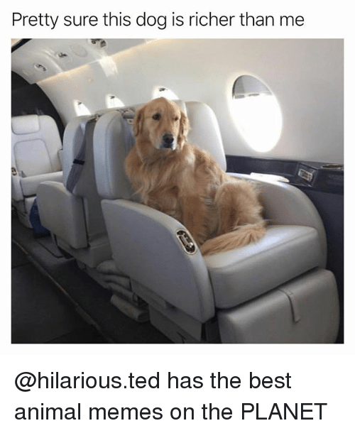 Funny Memes And Ted Pretty Sure This Dog Is Richer Than Me
