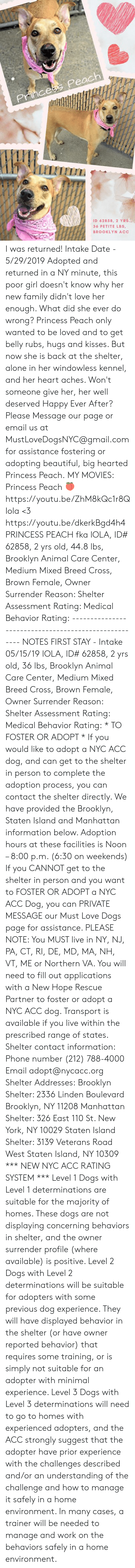 Being Alone, Beautiful, and Dogs: Princess Peach  ID 62858, 2 YRS.,  36 PETITE LBS,  BROOKLYN ACC I was returned!  Intake Date - 5/29/2019   Adopted and returned in a NY minute, this poor girl doesn't know why her new family didn't love her enough.  What did she ever do wrong?   Princess Peach only wanted to be loved and to get belly rubs, hugs and kisses.  But now she is back at the shelter, alone in her windowless kennel, and her heart aches.  Won't someone give her, her well deserved Happy Ever After?  Please Message our page or email us at MustLoveDogsNYC@gmail.com for assistance fostering or adopting beautiful, big hearted Princess Peach.  MY MOVIES:  Princess Peach 🍑  https://youtu.be/ZhM8kQc1r8Q   Iola <3   https://youtu.be/dkerkBgd4h4   PRINCESS PEACH fka IOLA, ID# 62858, 2 yrs old, 44.8 lbs, Brooklyn Animal Care Center, Medium Mixed Breed Cross, Brown Female,  Owner Surrender Reason:  Shelter Assessment Rating:  Medical Behavior Rating: ----------------------------------------------------- NOTES FIRST STAY - Intake 05/15/19  IOLA, ID# 62858, 2 yrs old, 36 lbs, Brooklyn Animal Care Center, Medium Mixed Breed Cross, Brown Female,  Owner Surrender Reason:  Shelter Assessment Rating:  Medical Behavior Rating:  * TO FOSTER OR ADOPT *   If you would like to adopt a NYC ACC dog, and can get to the shelter in person to complete the adoption process, you can contact the shelter directly. We have provided the Brooklyn, Staten Island and Manhattan information below. Adoption hours at these facilities is Noon – 8:00 p.m. (6:30 on weekends)  If you CANNOT get to the shelter in person and you want to FOSTER OR ADOPT a NYC ACC Dog, you can PRIVATE MESSAGE our Must Love Dogs page for assistance. PLEASE NOTE: You MUST live in NY, NJ, PA, CT, RI, DE, MD, MA, NH, VT, ME or Northern VA. You will need to fill out applications with a New Hope Rescue Partner to foster or adopt a NYC ACC dog. Transport is available if you live within the prescribed range of states.  Shelter contact information: Phone number (212) 788-4000 Email adopt@nycacc.org  Shelter Addresses: Brooklyn Shelter: 2336 Linden Boulevard Brooklyn, NY 11208 Manhattan Shelter: 326 East 110 St. New York, NY 10029 Staten Island Shelter: 3139 Veterans Road West Staten Island, NY 10309  *** NEW NYC ACC RATING SYSTEM ***  Level 1 Dogs with Level 1 determinations are suitable for the majority of homes. These dogs are not displaying concerning behaviors in shelter, and the owner surrender profile (where available) is positive.  Level 2   Dogs with Level 2 determinations will be suitable for adopters with some previous dog experience. They will have displayed behavior in the shelter (or have owner reported behavior) that requires some training, or is simply not suitable for an adopter with minimal experience.  Level 3  Dogs with Level 3 determinations will need to go to homes with experienced adopters, and the ACC strongly suggest that the adopter have prior experience with the challenges described and/or an understanding of the challenge and how to manage it safely in a home environment. In many cases, a trainer will be needed to manage and work on the behaviors safely in a home environment.