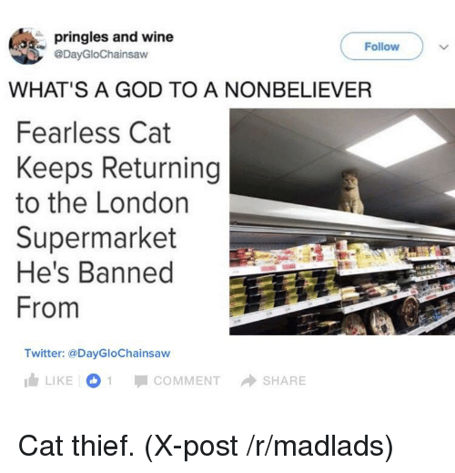 Pringles And Wine Follow WHATS A GOD TO A NONBELIEVER Fearless - Fearless cat keeps returning to the london supermarket hes banned from