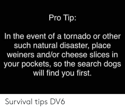 Dogs, Memes, and Search: Pro Tip:  In the event of a tornado or other  such natural disaster, place  weiners and/or cheese slices in  your pockets, so the search dogs  will find you first. Survival tips   DV6