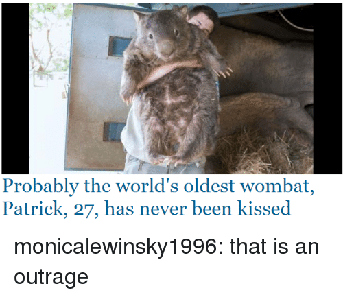 Tumblr, Blog, and Http: Probably the world's oldest wombat,  Patrick, 27, has never been kissed monicalewinsky1996: that is an outrage