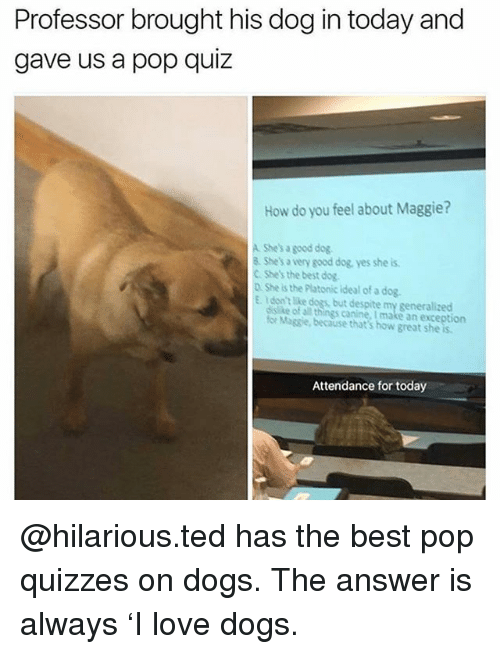 Professor Brought His Dog in Today and Gave Us a Pop Quiz