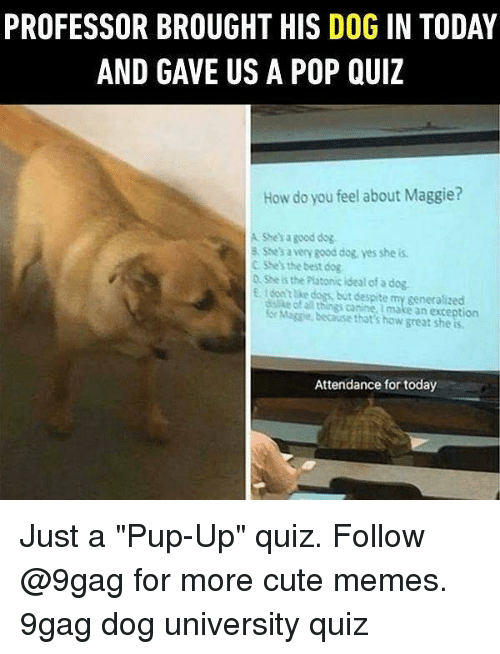 """9gag, Cute, and Dogs: PROFESSOR BROUGHT HIS DOG IN TODAY  AND GAVE US A POP QUIZ  How do you feel about Maggie?  A Shesa good dog  8 She's a very good dog, yes she is  C SSes the best dog  D She is the Plotonic Ideal of a dog.  EI dont e dogs, but despite my generalizecd  dalike of a things canine, I make an exception  or Migsie, because that's how great she is  Attendance for today Just a """"Pup-Up"""" quiz. Follow @9gag for more cute memes. 9gag dog university quiz"""