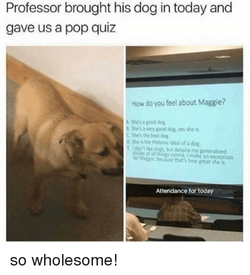 Dogs, Pop, and Best: Professor brought his dog in today and  gave us a pop quiz  How do you feel about Maggie?  A Shes a good dog  S She's avery good dog yes she is  C She's the best dog  О.Stes the Platonic ideal of a dog  Edon't lke dogs but despite my gseneralized  ke of all things canine, I make an exception  er Maggie, because that's how great she is  Attendance for today so wholesome!