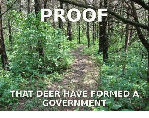 Deer, Memes, and Government: PROOF  THAT DEER HAVE FORMED A  GOVERNMENT